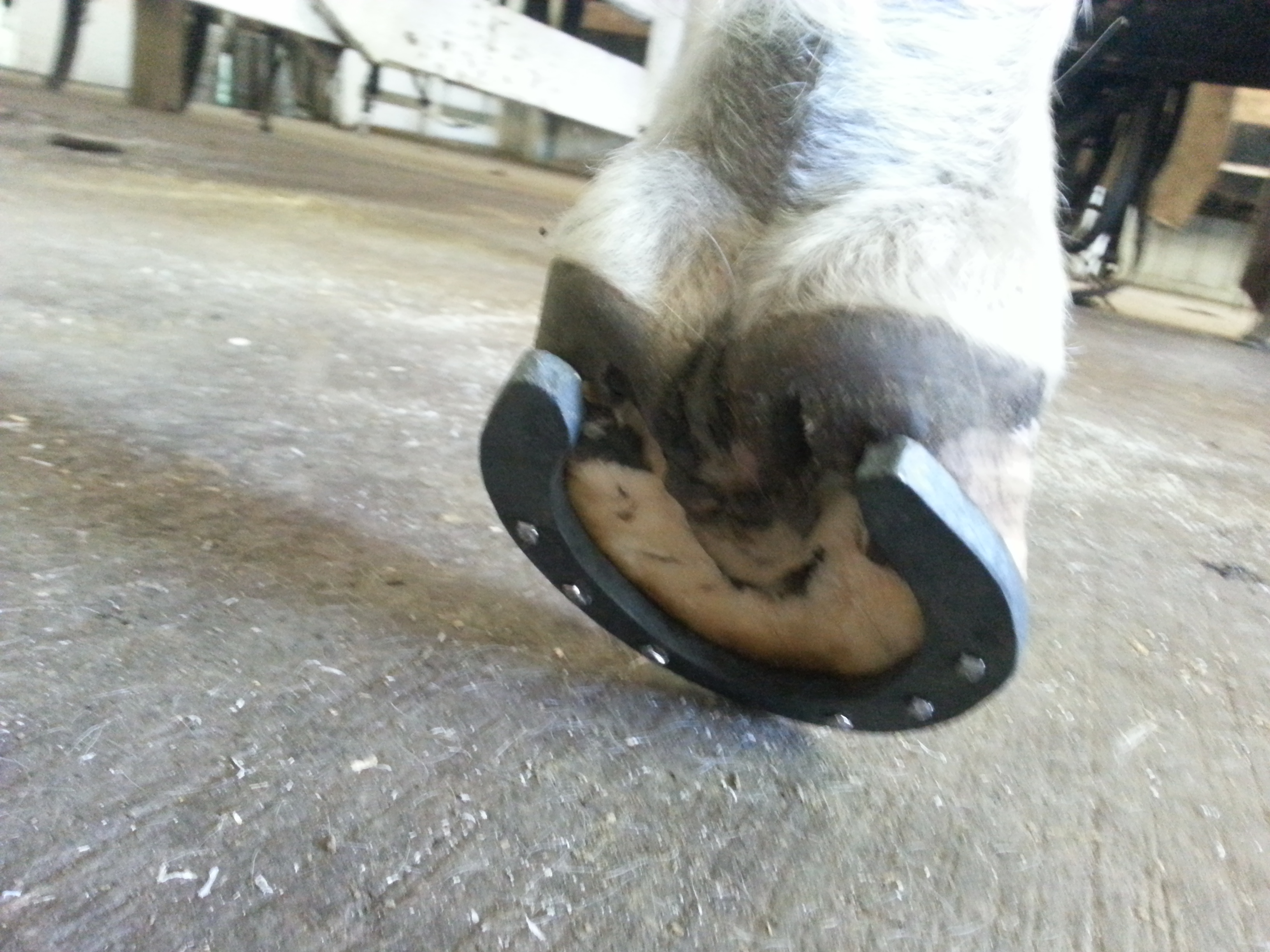 Many Hooves Farrier and Equine Services, LLC - Hoof trimming ...